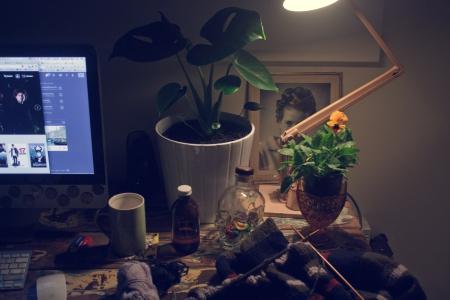 indie plants